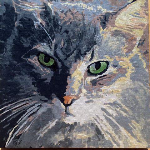 jeff cat