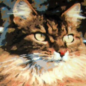 cat paint by number
